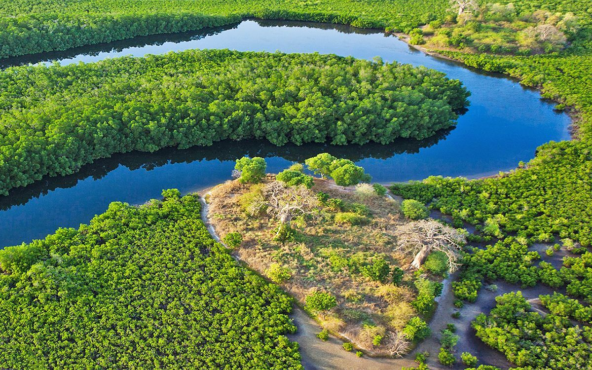 Mangrove Mangrove Saloum Delta, a beautiful jewel between land and sea